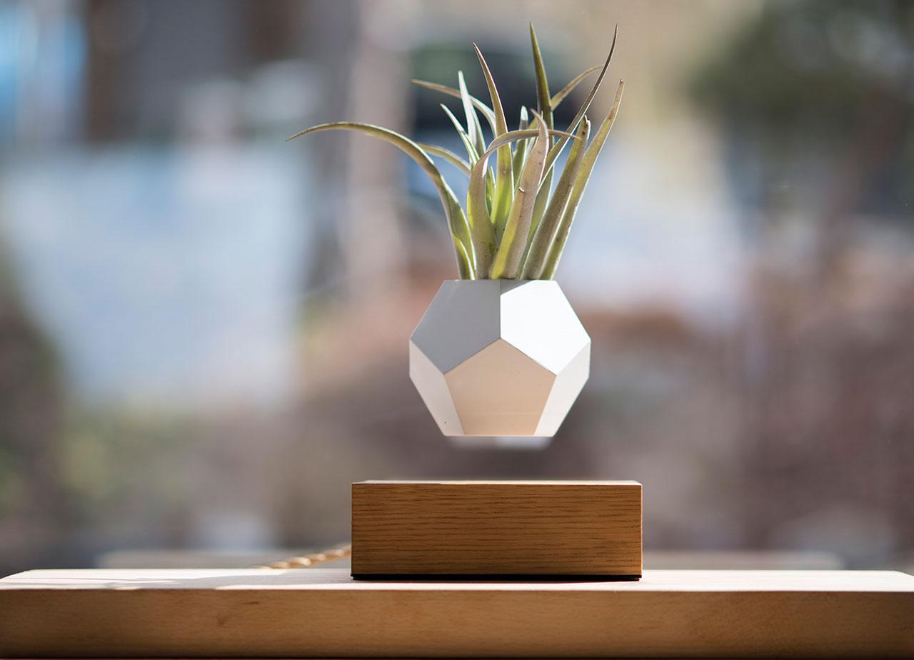 Lyfe System Floating Plants