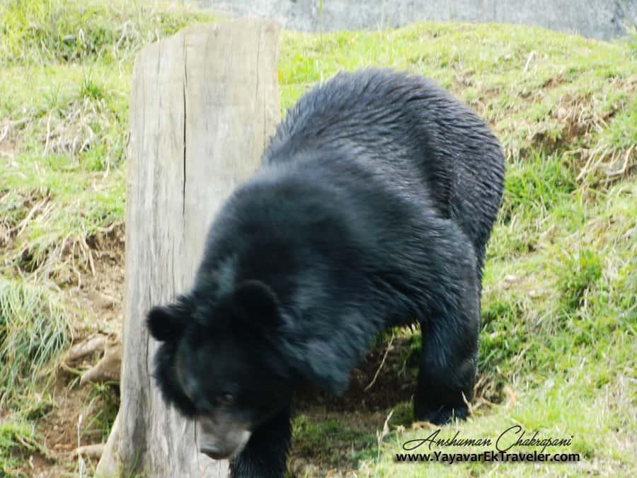 Him_bear