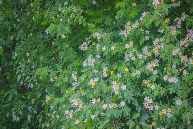 Wild flowers by the river