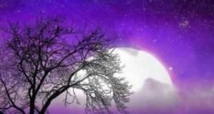 Çoban Yıldızı  Sibel Karagöz