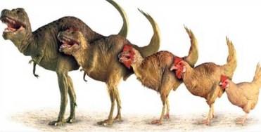 Evrim  1. Bölüm     Ethem Arı