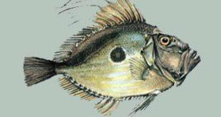 Balıkçılar  Recai Oktan