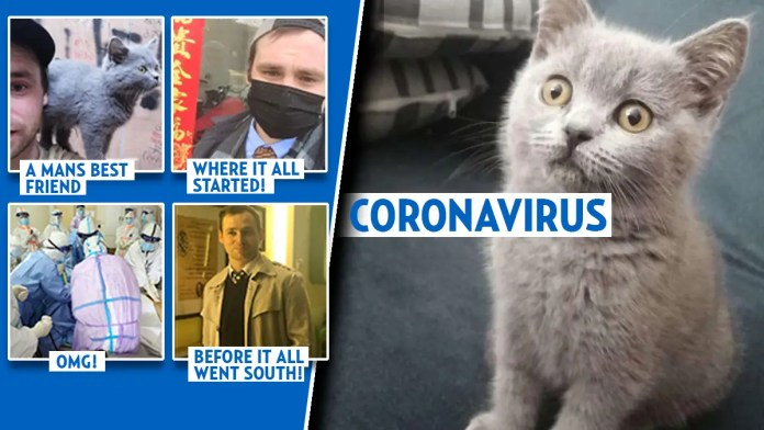 Kitten dies of coronavirus but the 72-day backstory will end the flu-corona comparison » Your Content
