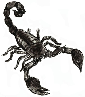 How to Draw a Scorpion Draw Step by Step
