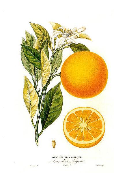 Comment conserver ses jus de fruits maison ?