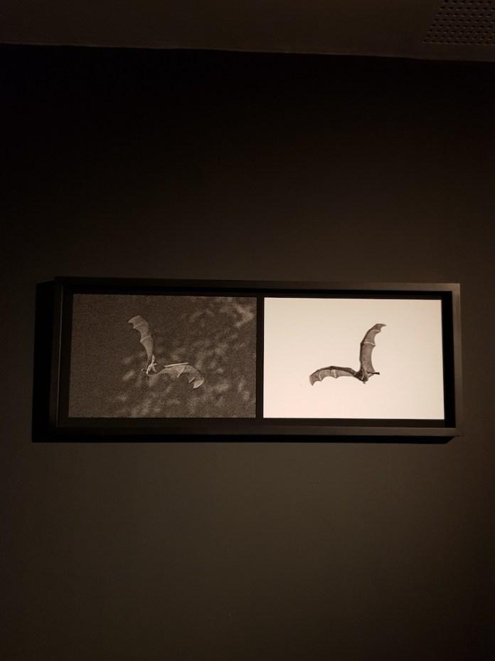 עטלפים של יובל חן