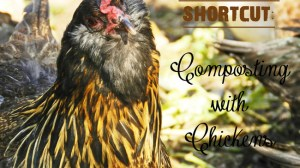 Homestead Shortcut: Composting with Chickens