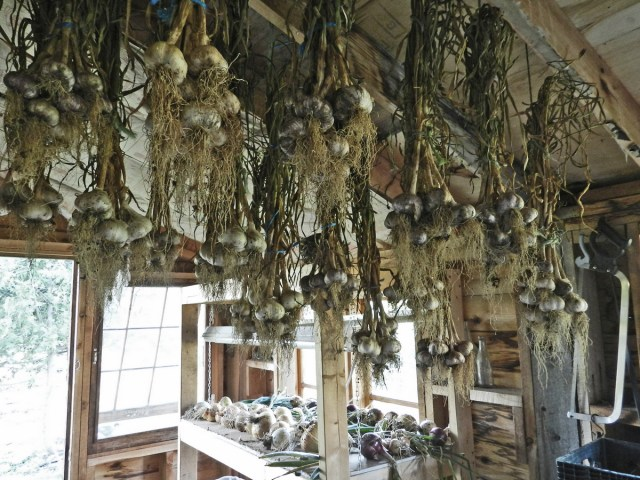 How to Prepare Garlic for Long Term Storage