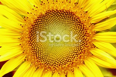 A standard iStock comp image
