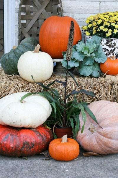 The air is crisp and the pumpkins are ripe. Fill your Fall Front Porch with color and variety.