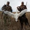 Kyle's Tundra Swan