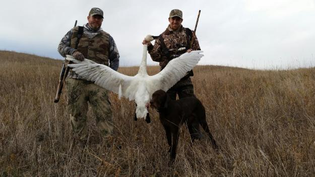 Kyle's First Tundra Swan