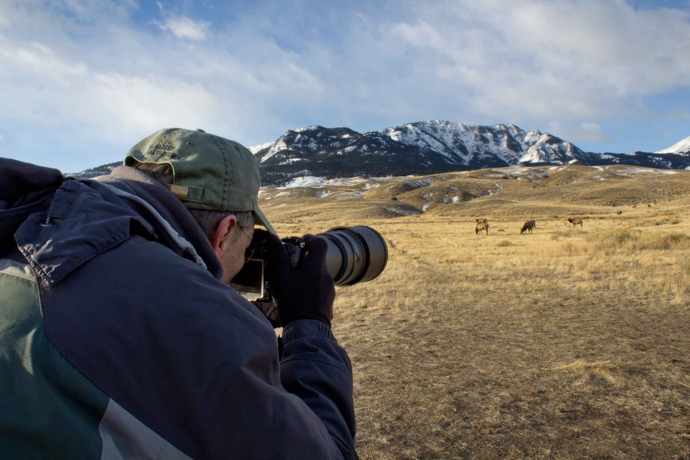 How to Get Amazing Wildlife Photos in Yellowstone