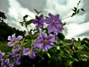 Inverewe Gardens (2)