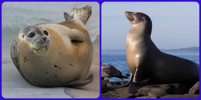 Seal Sea lion nombres de animales