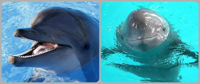 dolphin porpoise nombres de animales