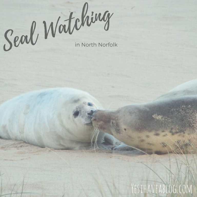 Seal Watching in Horsey North Norfolk | Yesihaveablog | Winterlust | Winter Travel
