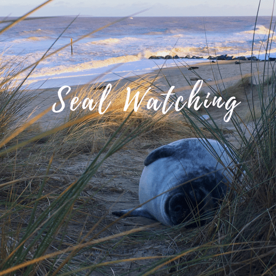 The Seals at Horsey – Seal Watching at Horsey Gap
