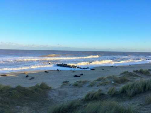 Get Seal Colony at Horsey Beach - Yesihaveablog | Seal Watching Horsey | Norfolk - Life in a Fine City | Winterlust