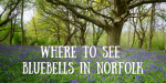 Where to See wild Bluebells in Norfolk