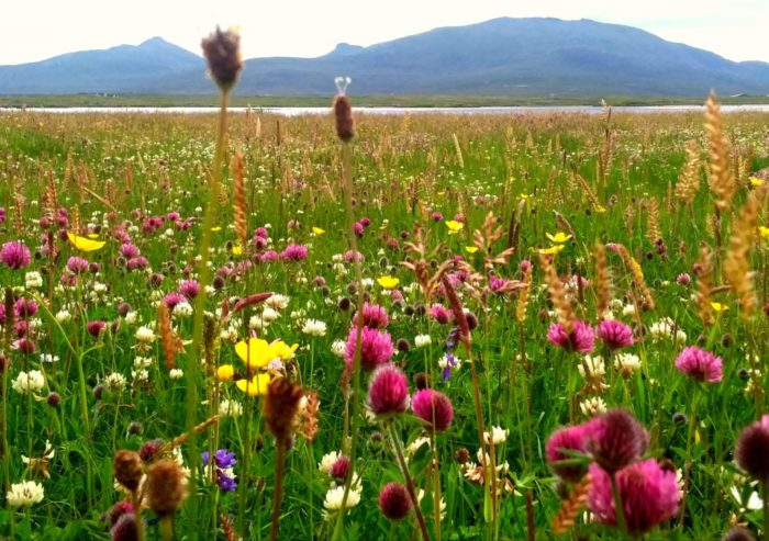 Walking the Timeline of Britain - The picturesque machair, fertile land next to the coast