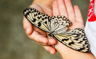 Butterfly picture from Shutterstock