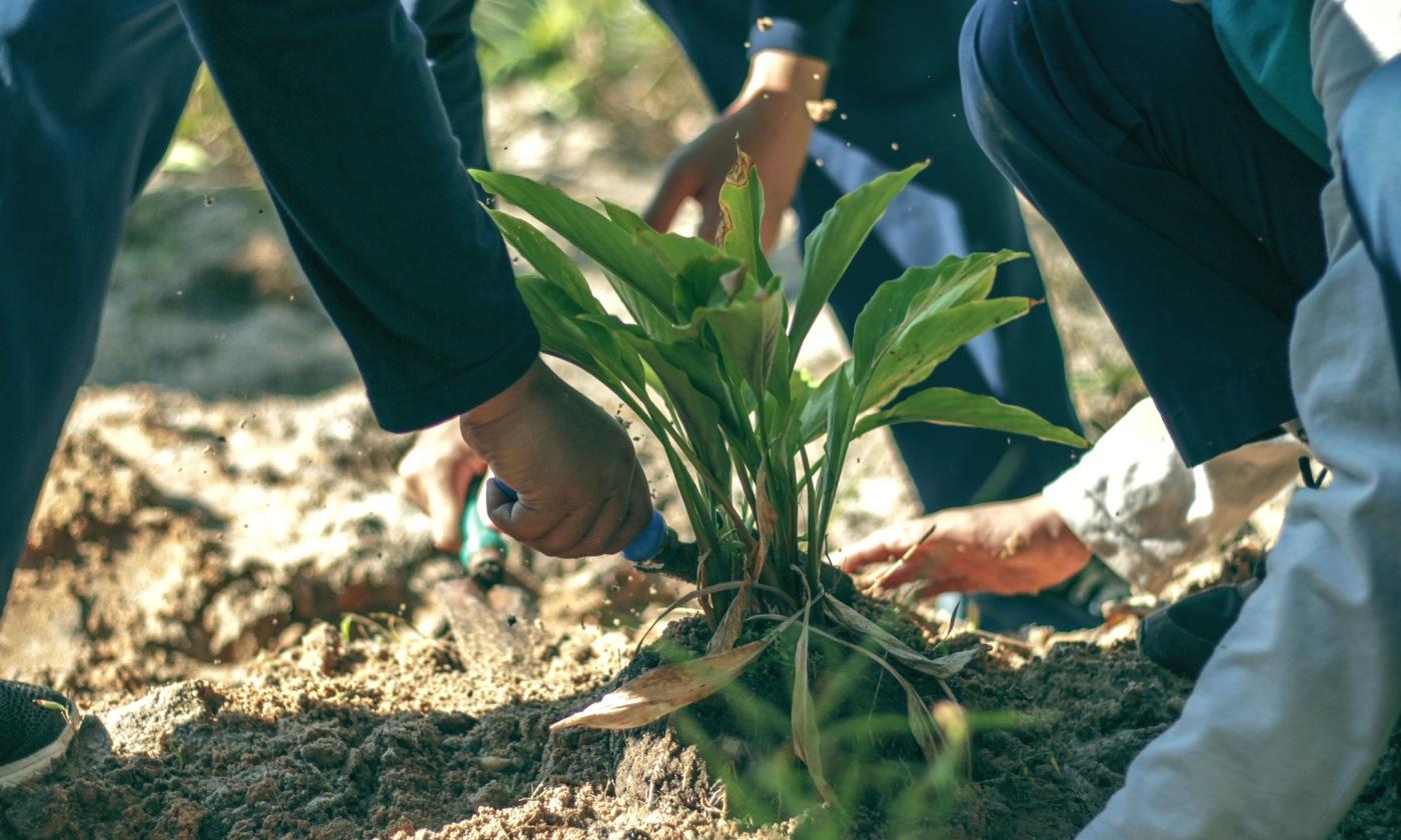 soil-dirt.jpg
