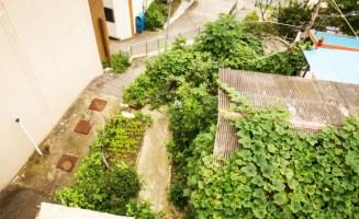 Korean Gardens.jpg