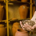Borrow, Save, Share: 3 Ways Seeds Can Democratize Our Food System
