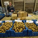 The Netherlands Can Feed the World. Here's Why It Shouldn't