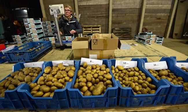 Netherlands Farming.jpg