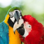 Can Empathy for Birds Make Us Happier? Ten Breakthroughs in the Science of a Meaningful Life