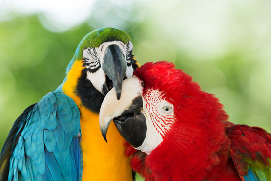 Birds Nuzzling photo from Shutterstock