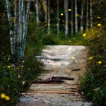 A Lesson From the Fireflies