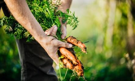 carrotcrop.jpg
