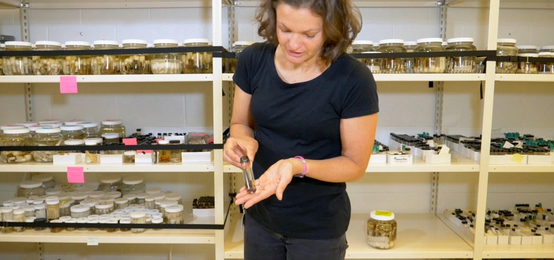 Dr. Katrina Menard