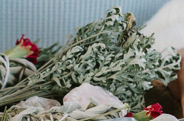 Plantes sacrées pour purifier: Artemisia vulgaris / mugwort / l'armoise