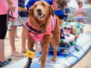 surf dog therapy