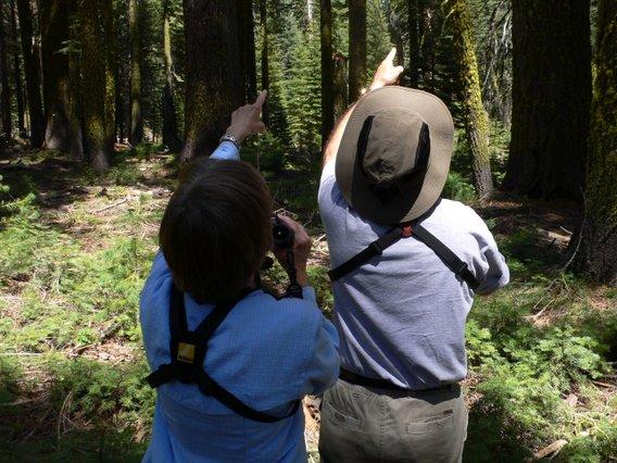 Yosemite-Birding-Walk-YExplore-Lukas-568