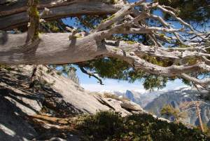 Climb a Little Higher: Wednesday Wanderings in Yosemite
