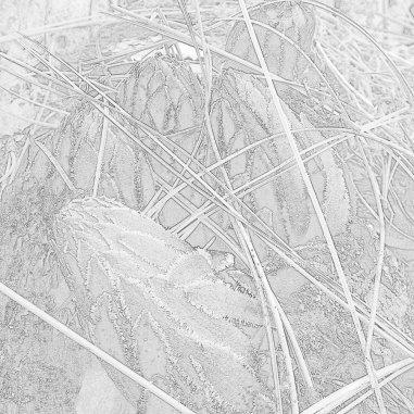 Yosemite-Snowplant-YExplore-DeGrazio-Apr2014-002