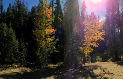 Yosemite-Aspen2-Panorama-YExplore-DeGrazio-Oct14