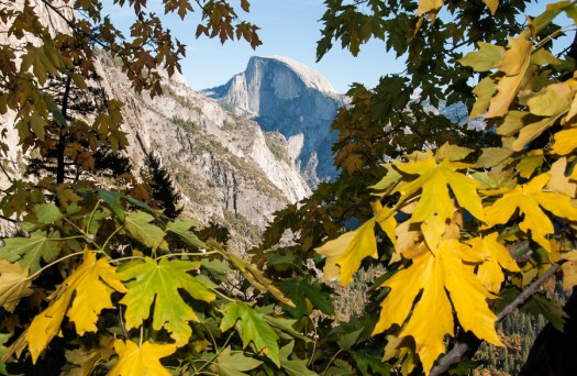Yosemite-HalfDome-Maples-YExplore-DeGrazio-NOV2014