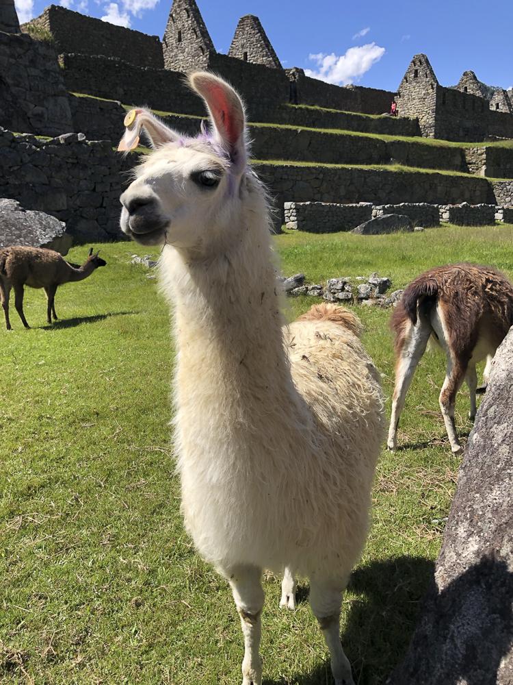 Lllama of Machu Picchu