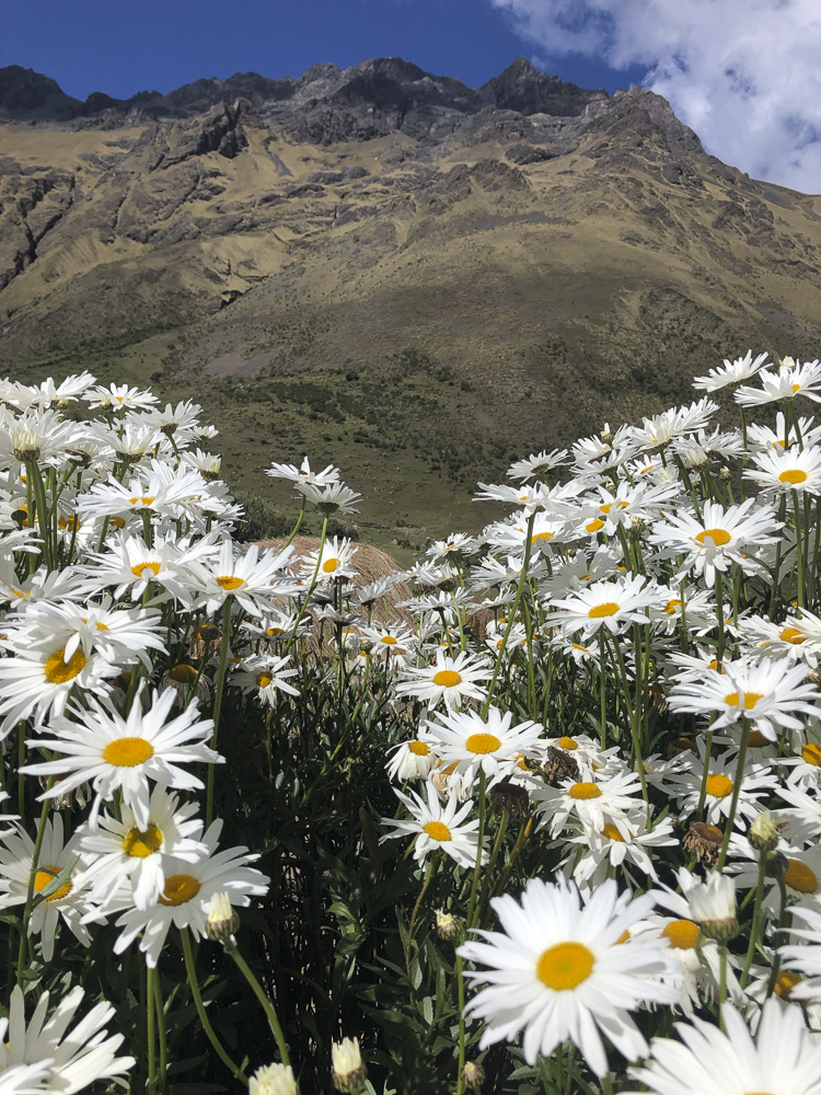 Flowers of the Inca Trail