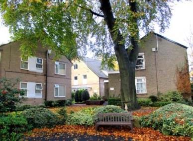 View of a tree with dwellings in the background at Carrs Lane Gardens