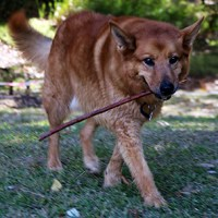 Max with stick