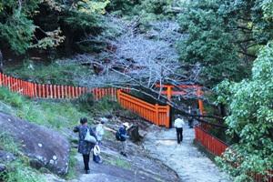 Snake on Kamikura shrine path