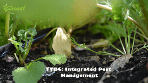 Turnip your Backyard Garden: Integrated Pest Management @ The Yisrael Family Urban Farm | Sacramento | CA | US