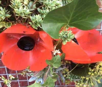 Eastbourne poppy